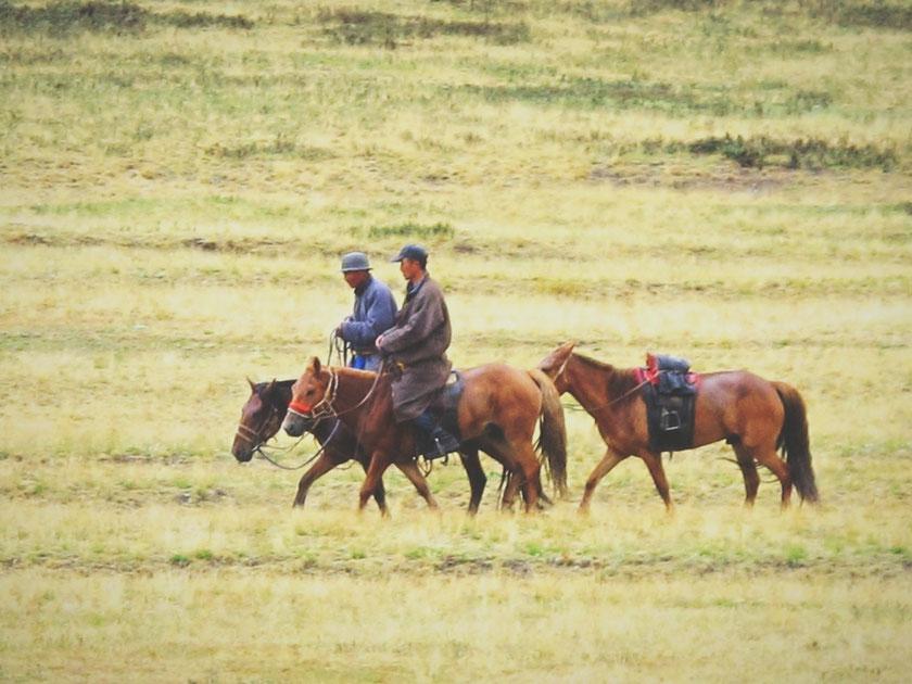 bigousteppes mongolie naadam chevaux nomades