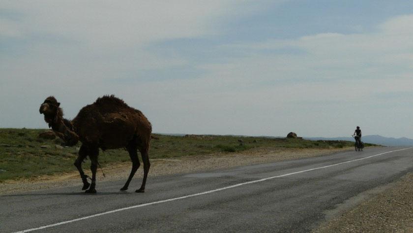 Dans le desert de Mangistau