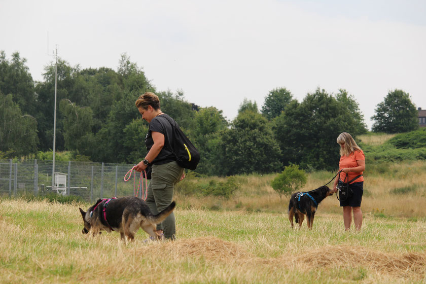 Duotraining - Hundetrainer Bochum Herne - Hundeschule Bochum Herne Ruhrgebiet - Hundetraining Clickertraining Clicker Markertraining