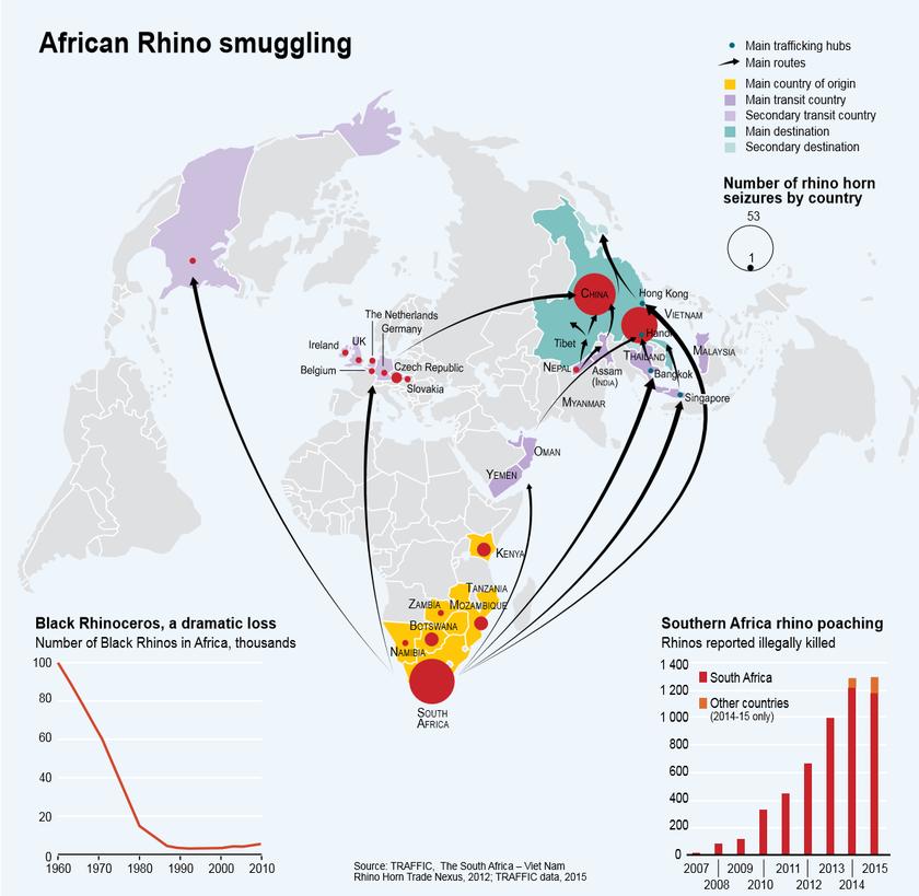 Handelswege Nashorn Umwelt Kriminalität