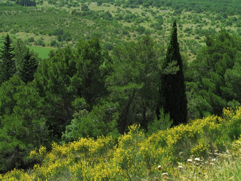 """Blick vom Castel del Monte auf den Nationalpark Alta Murgia (""""hohes felsiges Land"""", Kalkhochebene in der Mitte Apuliens und im Osten der Basilicata )"""