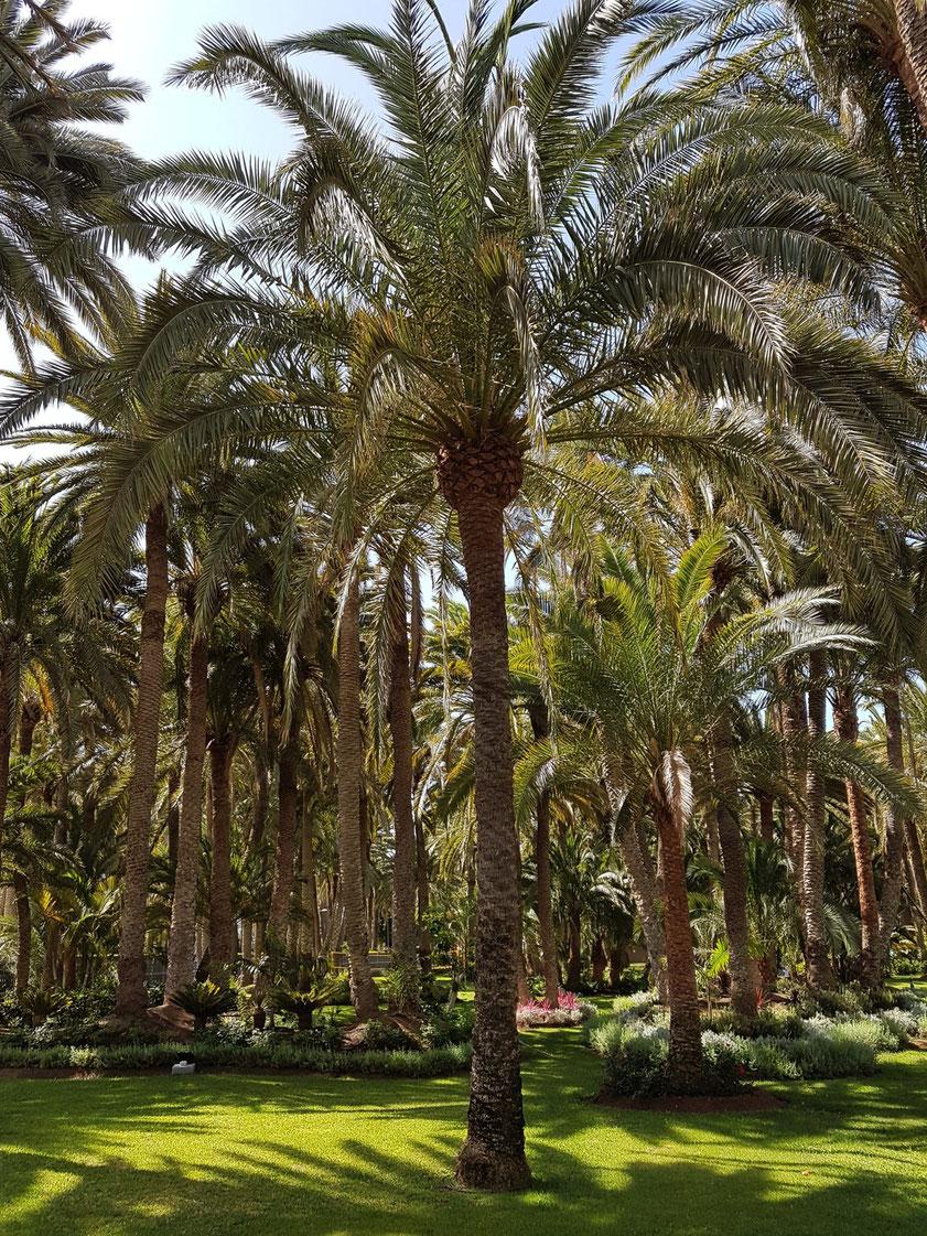 Riu Palace Oasis Parc