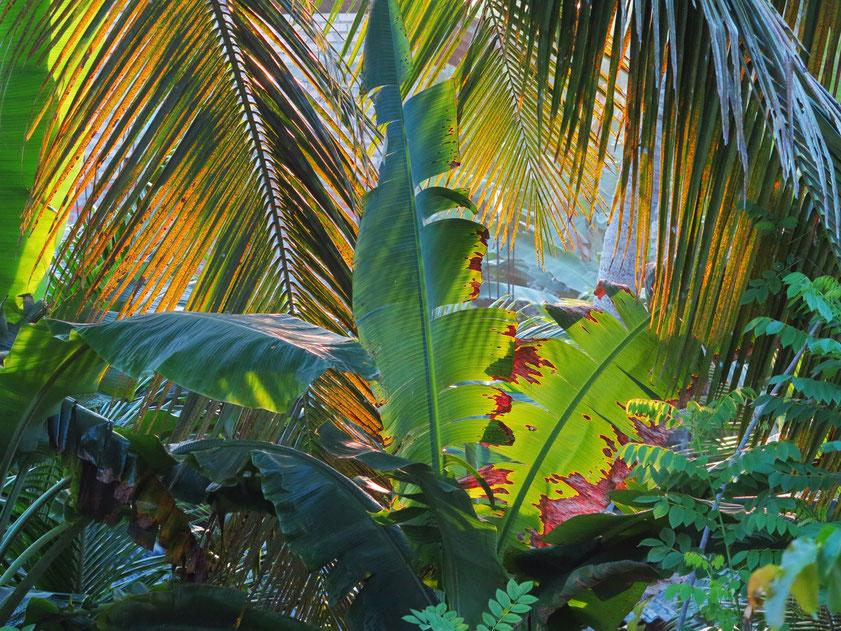 Tropical Colors, Blick von meinem Balkon in der Sisil Villa