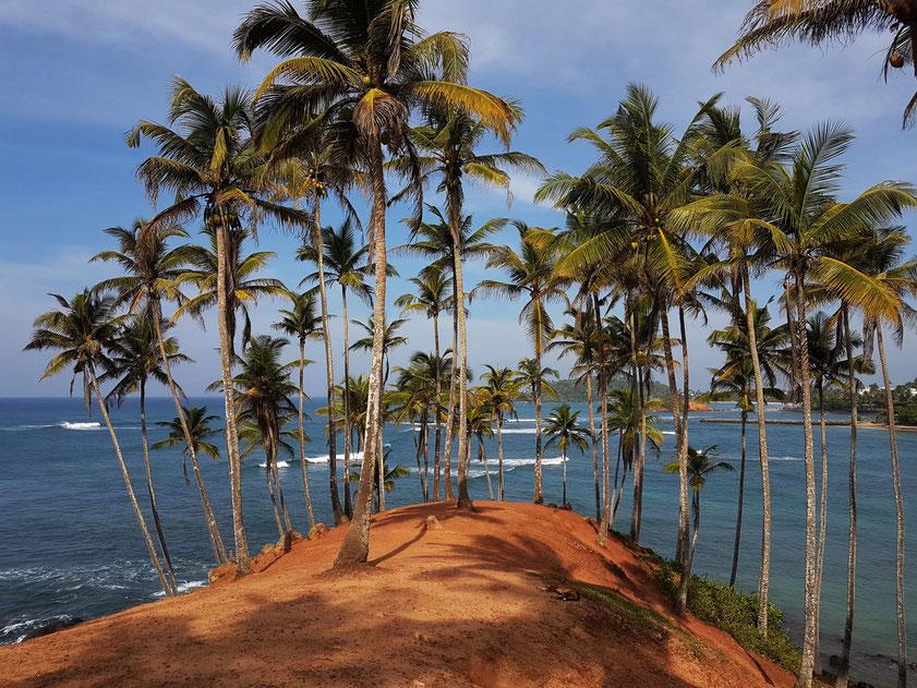 Coconut Garden Mirissa