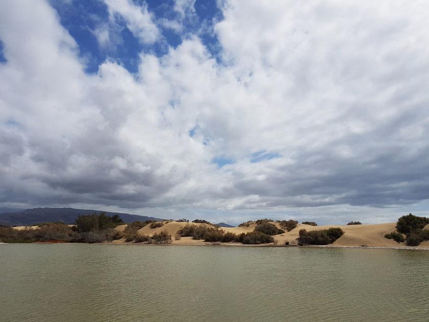 Meerwasserlagune  Charca de Maspalomas, Naturschutzgebiet mit Wasservögeln
