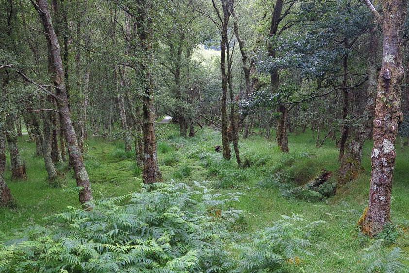 Glendalough. Wanderung vom oberen zum unteren See