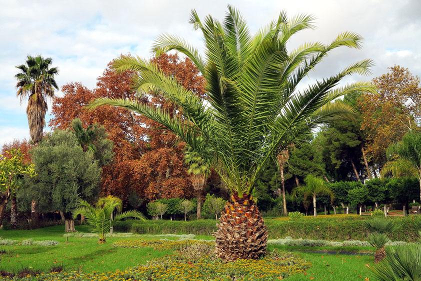 Stadtpark Ain Asserdoun