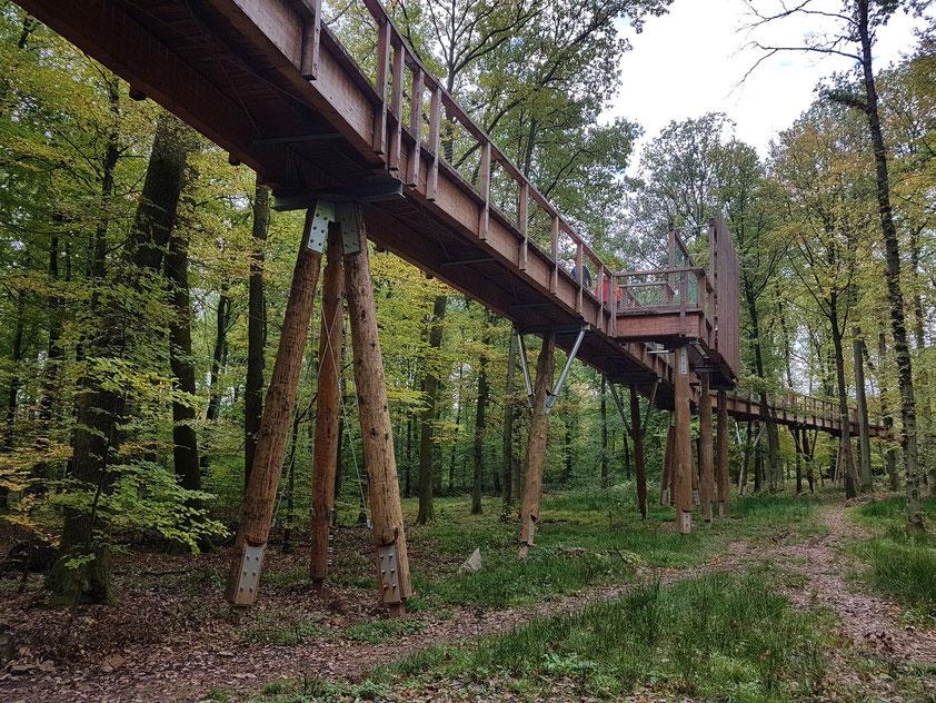 Baumwipfelpfad, Zugang zum Aussichtsturm des Baumwipfelpfades Saarschleife