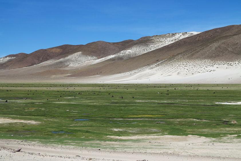 Talsenke (ehemaliges Gletschertal) mit Rindern im Wasser