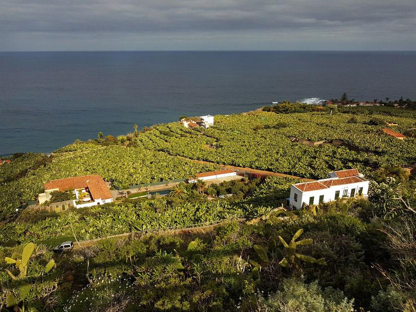 Blick vom Wanderweg PR TF 41 (Lomo de Boliche) nach Norden auf die Bananenplantagen