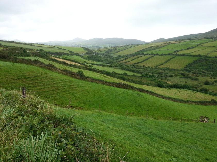 Typische irische Heckenlandschaft an der Südküste der Dingle-Halbinsel