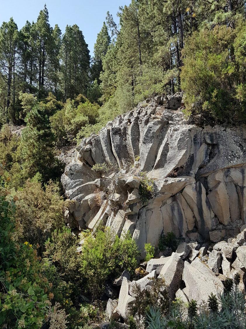 Lavarosette (Piedra La Rosa), ca. 7,5 km auf der TF-21 ab Aguamansa in Richtung Teide. Die Ausrichtung der radial angeordneten Lavasäulen verläuft immer senkrecht zur Abkühlungsfläche, hier also der Außenfläche eines Lavatunnels.