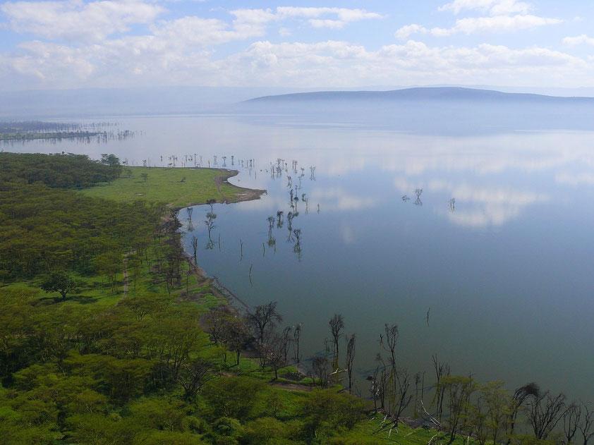 Nakurusee. Die Bäume im Wasser sind ein Hinweis auf den Anstieg des Seespiegels.