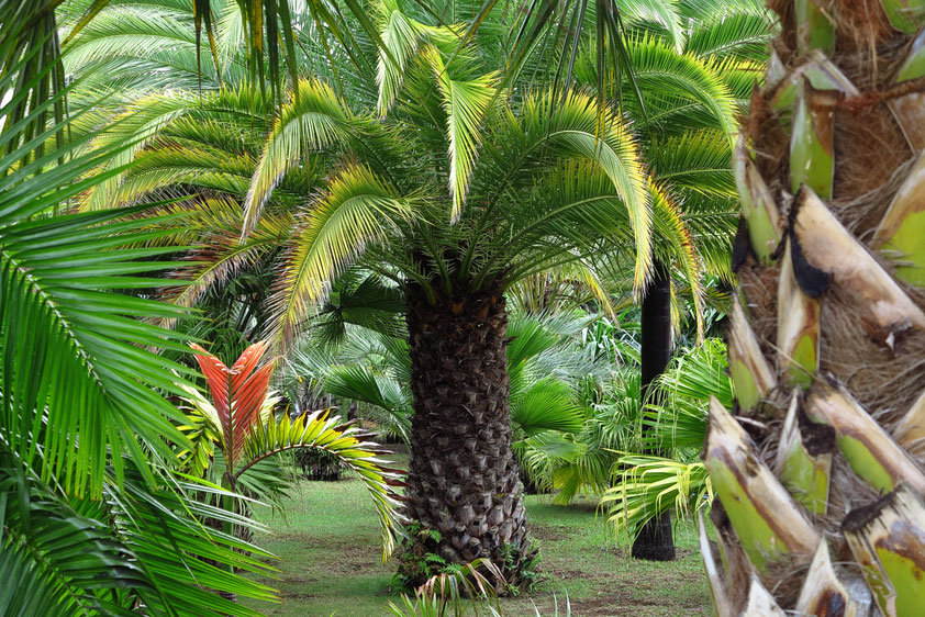 Jardim Botanico in Funchal