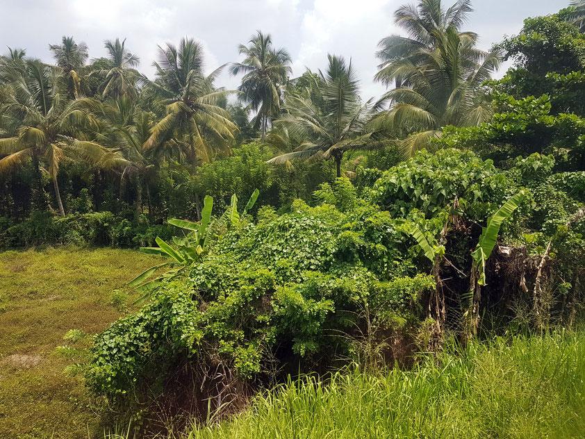 Mit dem Zug von Colombo nach Kandy