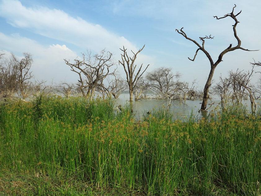 Auf dem Übernachtungsplatz am Baringosee. Die Bäume im Wasser zeigen den Anstieg des Seespiegels.