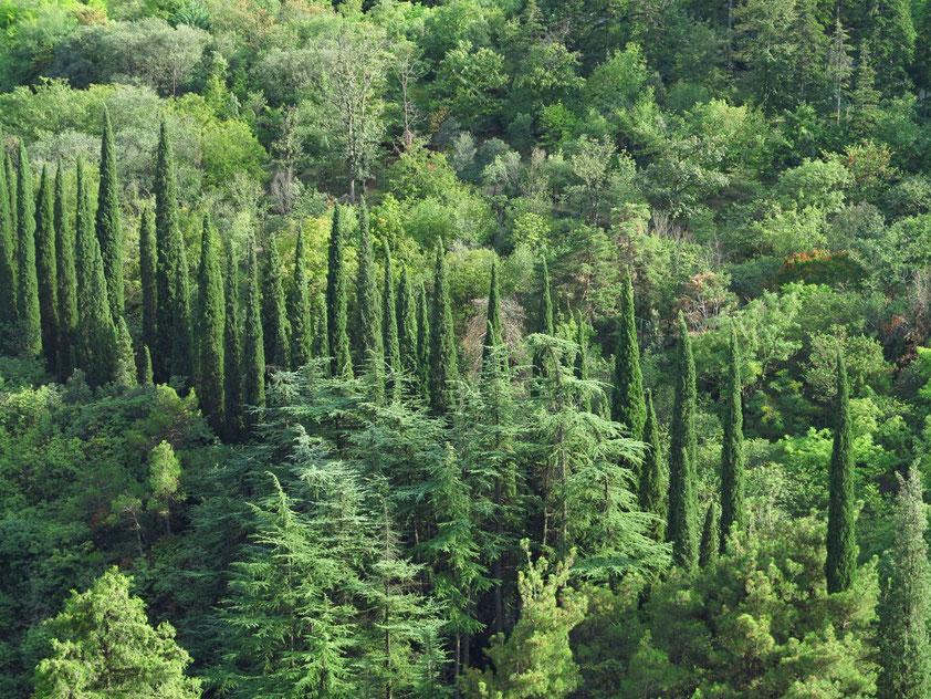 Botanischer Garten, Blick von der Nariqala-Festung