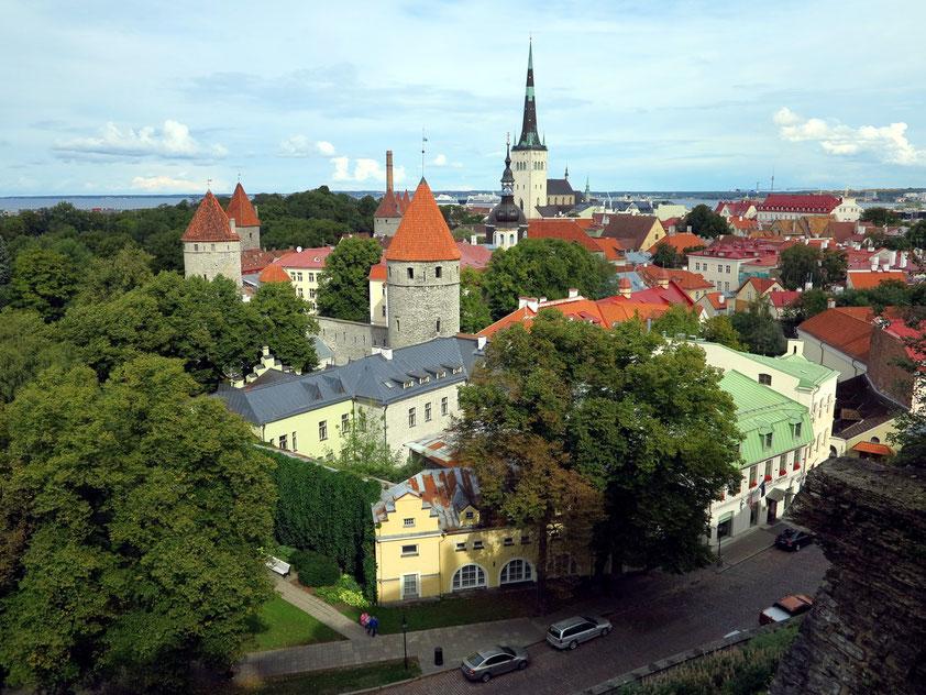 Tallinn, Blick von der Patkuli Viewing Platform nach Nordosten mit der Olaikirche