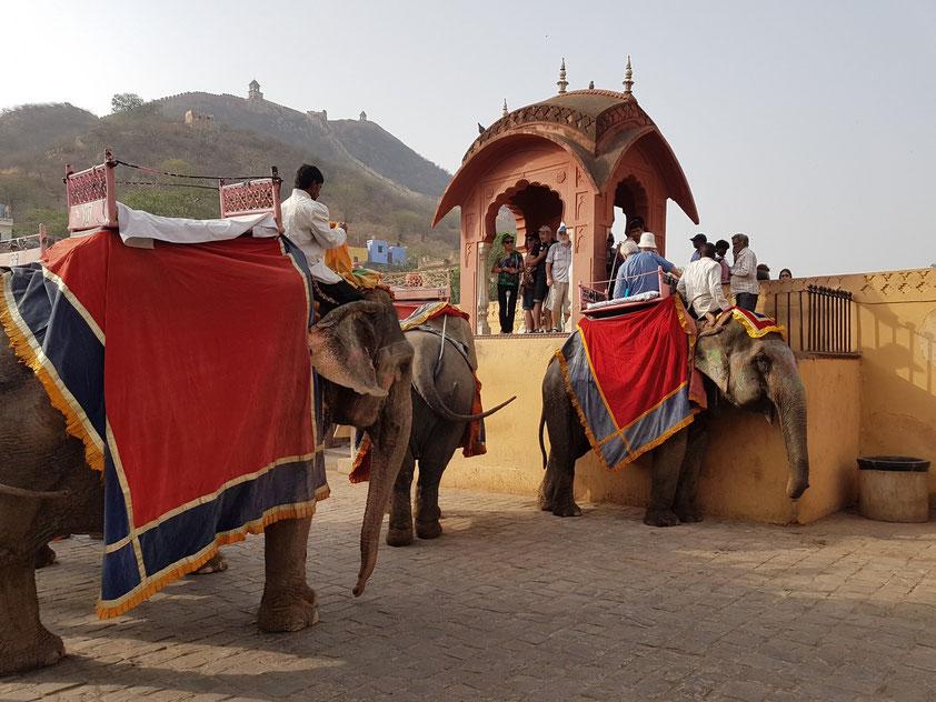 """""""Talstation"""" des Elefantentransports"""
