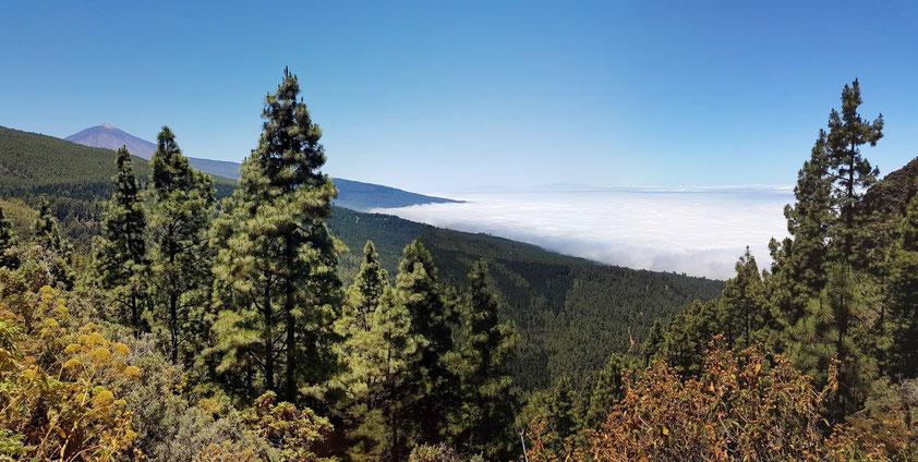 Blick vom Los Organos-Höhenweg zum Pico del Teide (3.715 m) und auf das Wolkenmeer über dem Norden von Teneriffa, am Horizont die Insel La Palma
