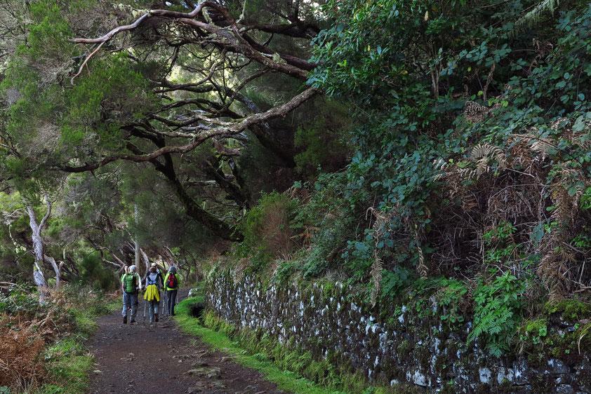 Ebener Wanderweg der Levada do Risco