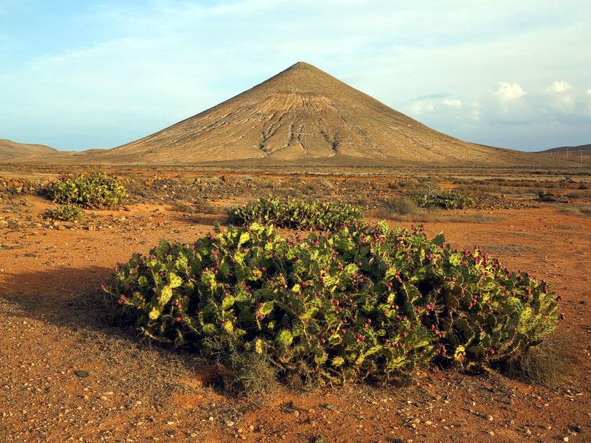 Landschaft bei La Oliva, im Vordergrund Feigenkakteen
