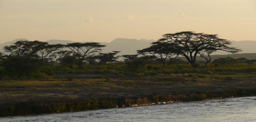 Abendstimmung mit Schirmakazien am Uaso Nyiro Fluss
