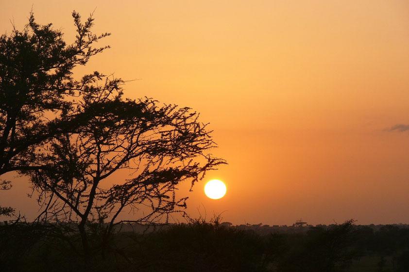 Sonnenaufgang über der Serengeti. Standort: Serengeti Public Campsite in freier Natur.