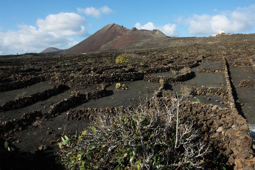Der Vulkan Monte Corona mit seinem Ausbruch ist verantwortlich für das Höhlensystem der Cueva de los Verdes und der Jameos del Agua. Kunstvoll aufgeschichtete Lavasteine schützen Weinreben und Feigenbäume vor dem austrocknenden Passatwind.