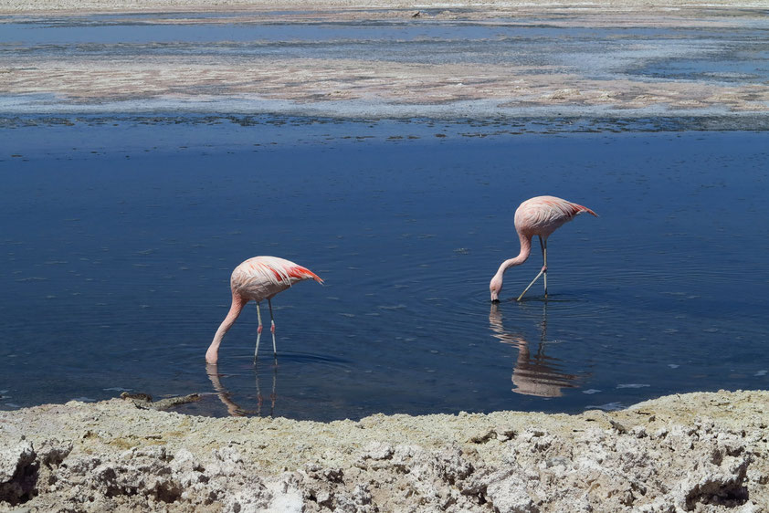Flamingoreservat der Lagune Chaxi
