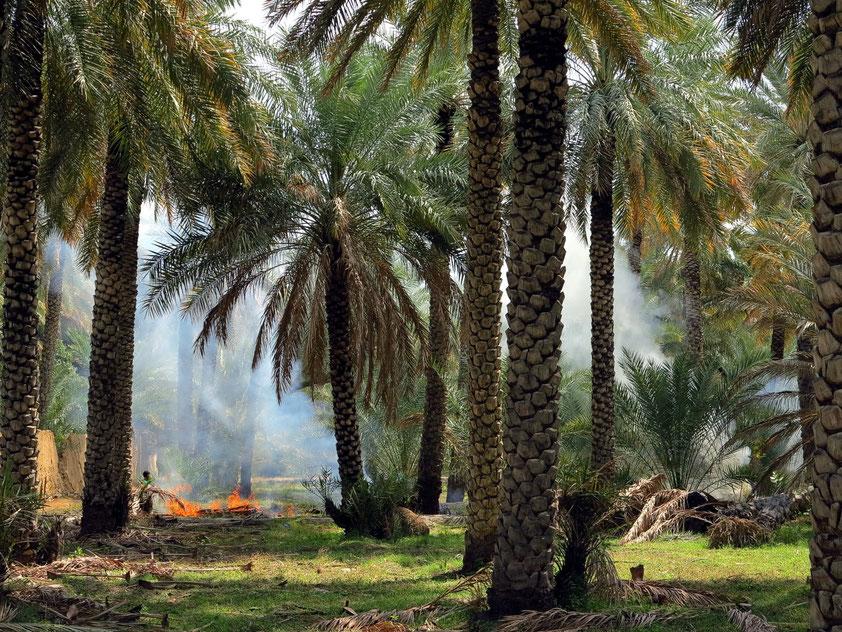 Palmenoase von Al Hamra
