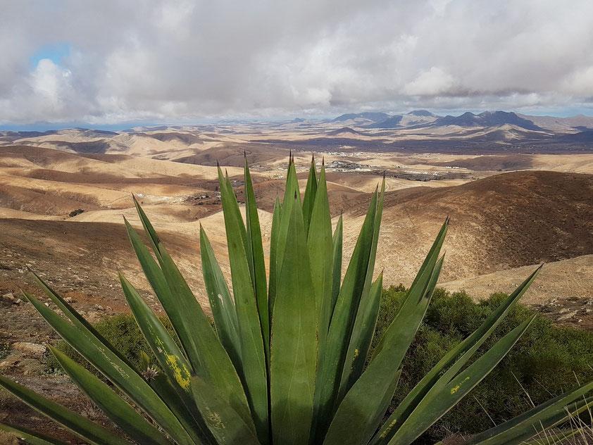 Blick vom Mirador de Morro Velosa (Agave)