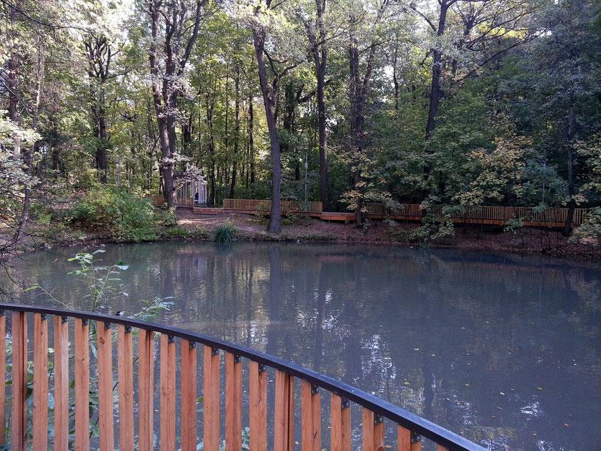 Teichanlage im Wald der Sperlingsberge auf dem Weg von der Metro-Station Vorob'evy Gory zur Aussichtsplatform