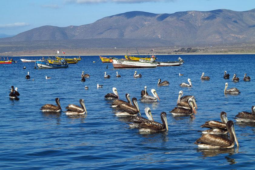 In der Bucht von Guanaqueros