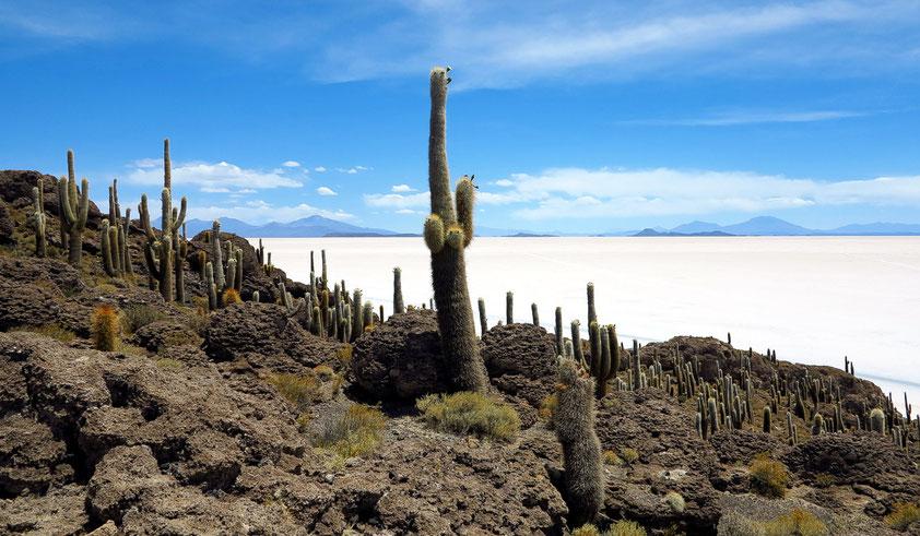 Bolivien, Insel Incahuasi im Salar de Uyuni