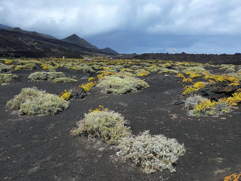 Vulkanlandschaft nördlich der Saline