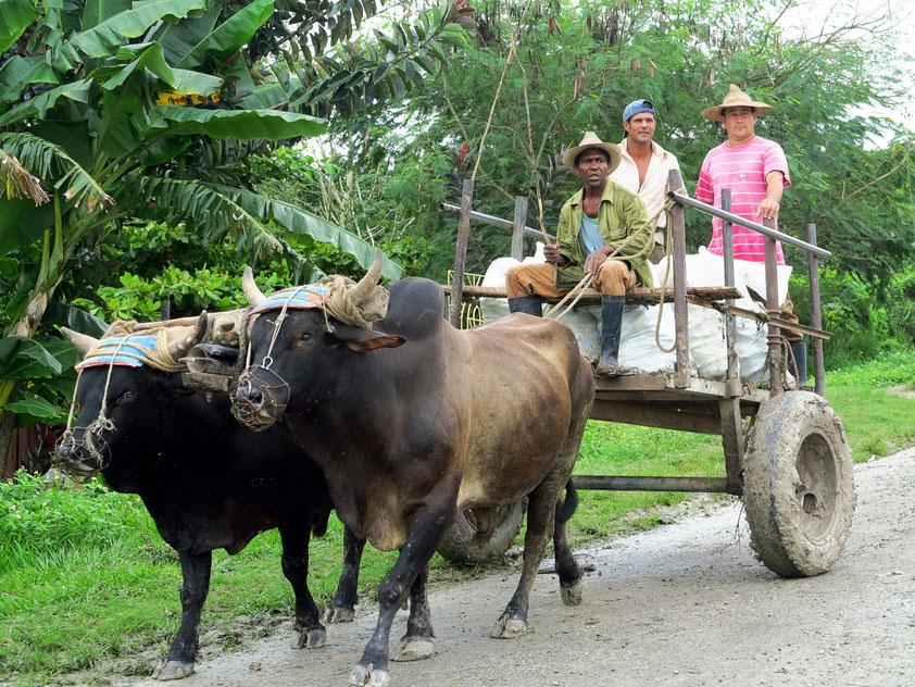 Ochsenkarren bei Bayamo