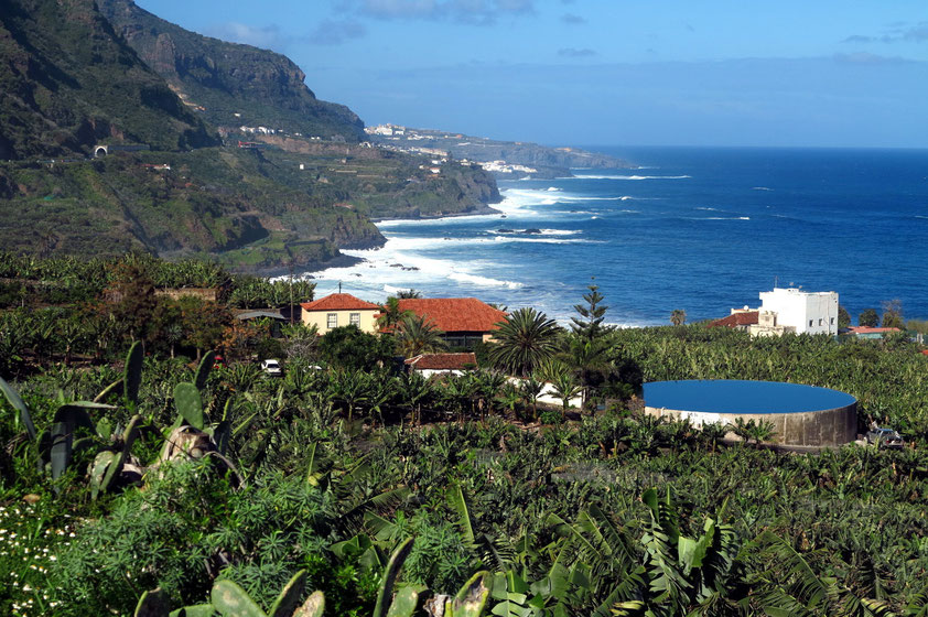 Bananenplantagen bei Los Realejos