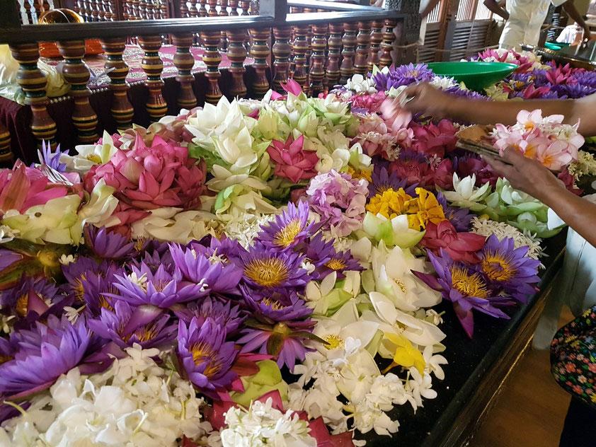 Lotosblumen (und andere Blumen) als Opfergaben, Sinnbild für Reinheit, Treue, Schöpferkraft und Erleuchtung