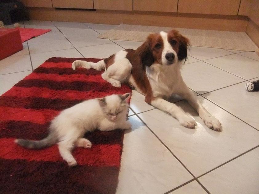Zwei kleine Freunde