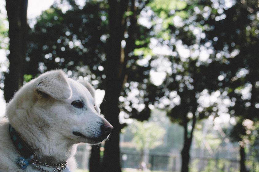 耳の痛い話|ブレイブトレイン