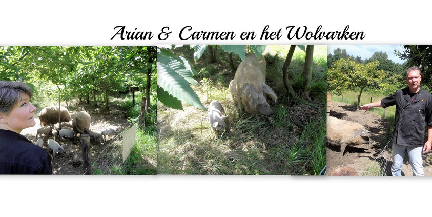 Arian & Carmen SitioDeJamon en het wolvarken