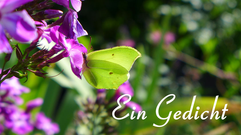 Inspiration - Gedicht von William Wordsworth - To a Butterfly
