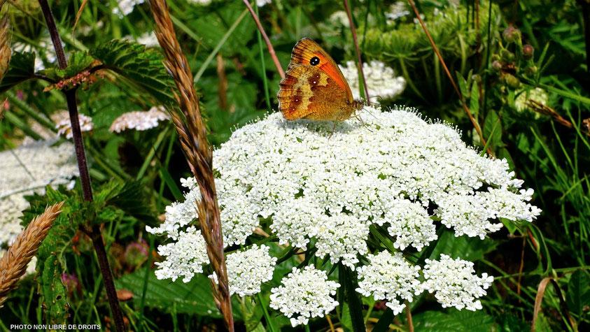 Faune et flore à Etretat, photo non libre de droits