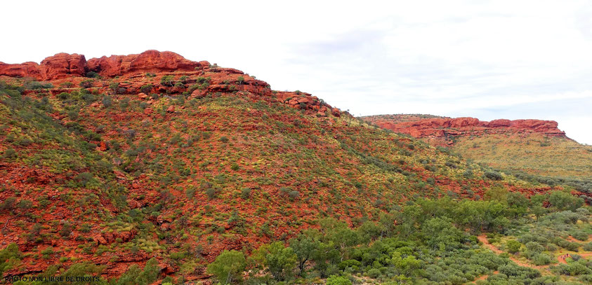 De rouge et de vert, Watarrka National Park, Australie?, photo non libre de droits