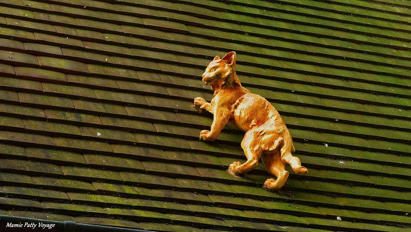Un chat au Normady Barrière, Deauville, photo non libre de droits