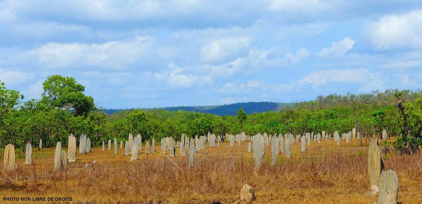 Champ de termitières magnétiques, Litchfield National Park, Australie, photo non libre de droits