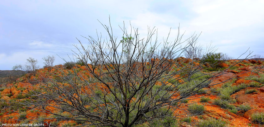 Olive Pink Botanic Garden, Alice Springs, photo non libre de droit
