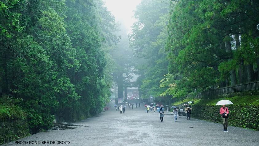 Pluiveuse allée à Tosho Gu, Nikko, photo non lbre de droits