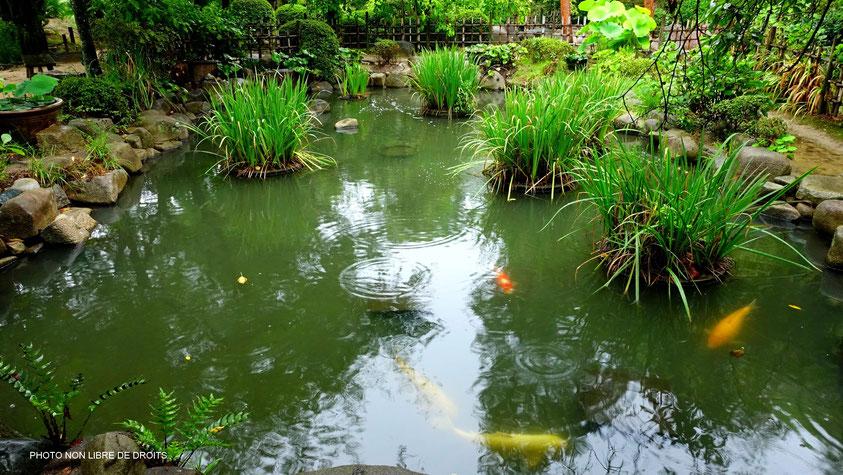 Le bain des carpes, Shukkei-en, Hiroshima, photo non libre de droits
